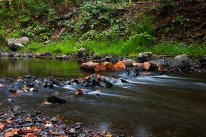 September Morning at Black Creek
