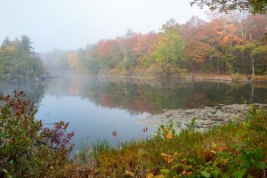 Foggy Morning at Sanctuary Pond III