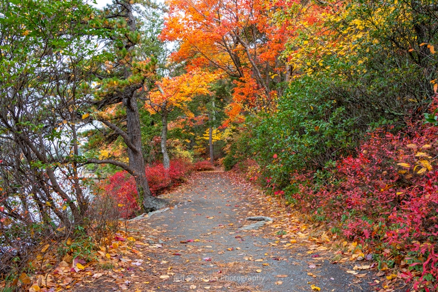 A photograph of fall foliage along one of the trails at Minnewaska State Park Preserve.
