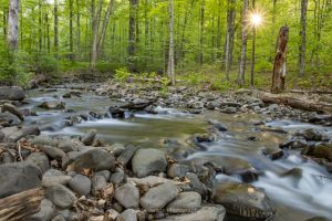 A long exposure photo of a stream along the Ashokan Rail Trail in Boiceville as the morning sun breaks through the trees.