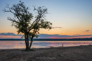 A photo of a tree on the Kingston Point Beach during a July sunrise over the Hudson River.